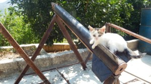 SYRIA ROCKET KITTEN --- USED 14-09-13