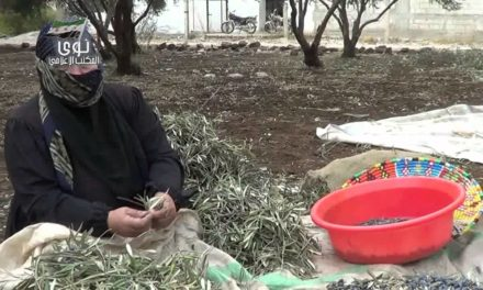 Syria Spotlight: From Idlib to Dar'aa, Syrians Risk Their Lives To Harvest Olives Amid Regime Shelling