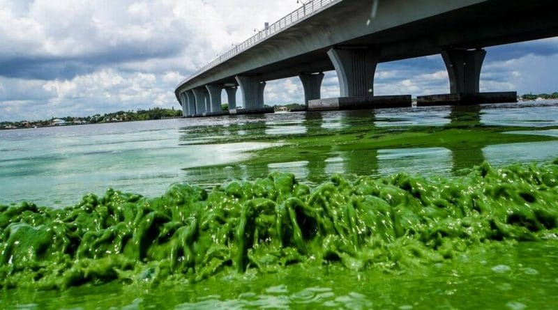 How Algae and Florida's Governor Are Killing Aquatic Life