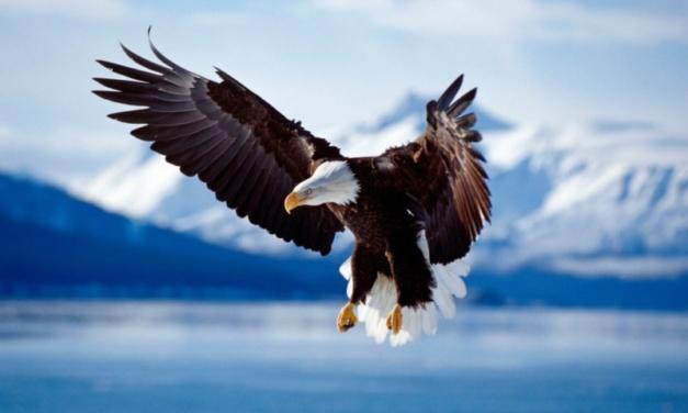 Trump Administration Weakens Endangered Species Act