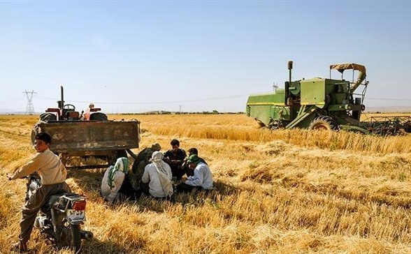Iran Daily: Tehran Admits Problems with Wheat Production
