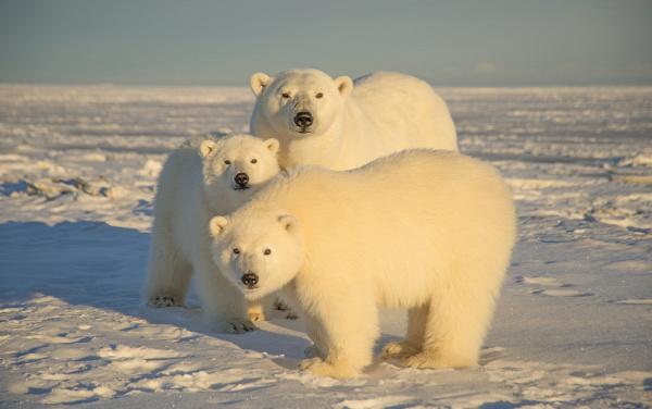 Biden Administration Suspends Drilling Leases in Arctic Refuge