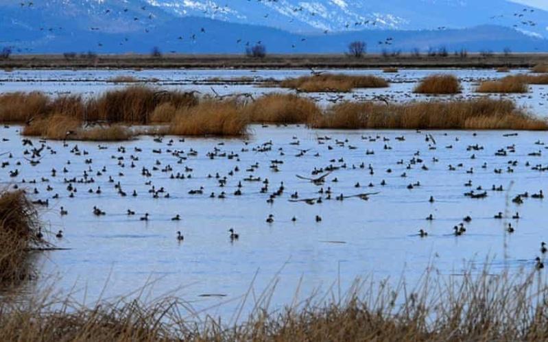 Federal Judge Rescinds Trump Threat to Wetlands